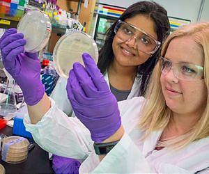 bakteri pembentuk biogasoline